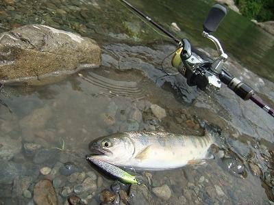 奥多摩フィッシングセンターで釣れたヤマメ